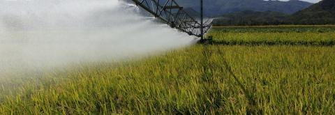 Irrigation des parcelles de riz
